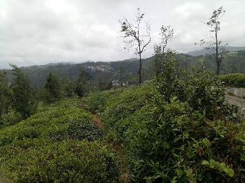 Residential Land for sale in Coonoor with 25 cents