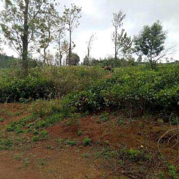 Residential Land for sale in Coonoor with 22.9 cents