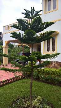 2 BHK Individual Houses / Villas for Sale in Tamil Nadu