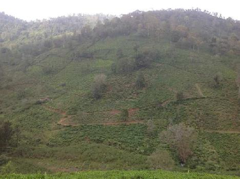 Agricultural land sale in coonoor