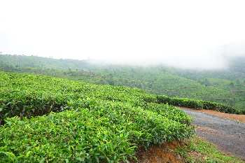 26 Acre Agricultural/Farm Land for Sale in Coonoor, Nilgiris