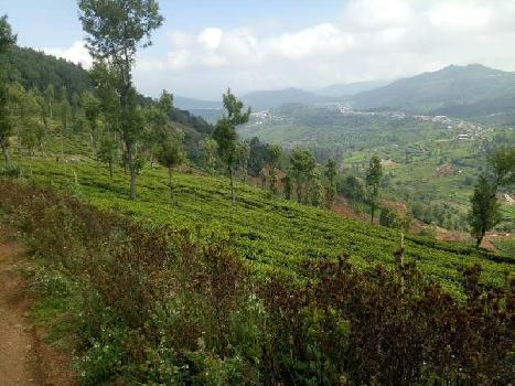 Tea estate sale in Kenthorai, Ooty
