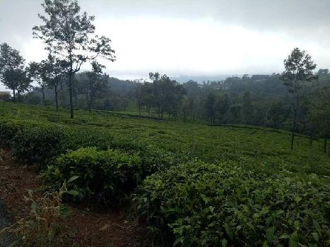 50 Cent Residential Plot for Sale in Coonoor, Nilgiris