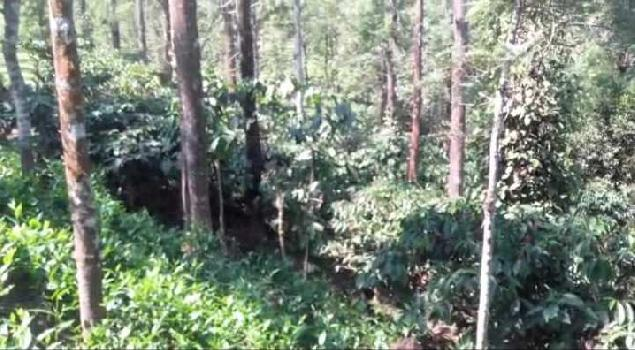 3 Acre Agricultural/Farm Land for Sale in Gudalur The Nilgiris, Nilgiris