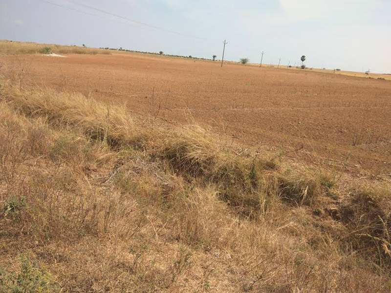 Agricultural Land for sale at Kurnool