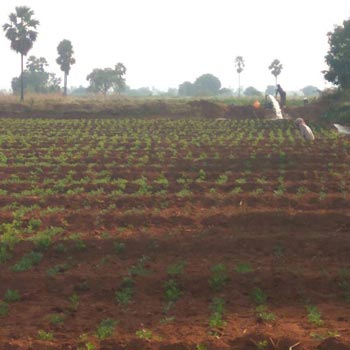 Agriculture land for sale in Boddapadu, Kodumur