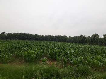 120 acers @ rudraram land is for sale.