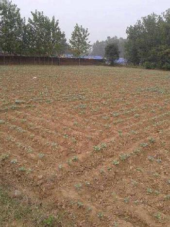 Residential Land for Sale in Anant Raj Estates, Sector-63a Gurgaon