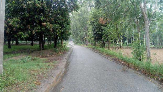 Agricultural/Farm Land for Sale in Haridwar