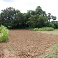 Residential Land for Sale in Navsari, Surat,Gujarat