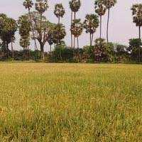 Agriculture Land For Sale In Assandh , Karnal