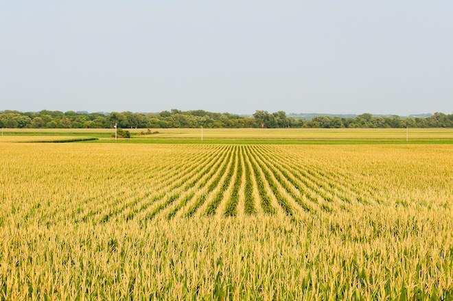 Agricultural Land For Sale In Radaur, Yamunanagar
