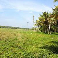 35 Bigha Farm Land for Sale At Greater Noida