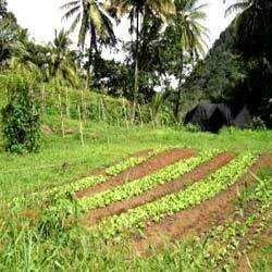 25 Bigha Agricultural Land for Sale At G.noida