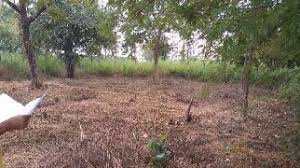 Residential Land for Sale in Kadamba Plateau