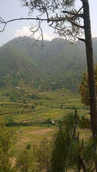 Agriculture, Cum commercial land in Almora Utrakhand