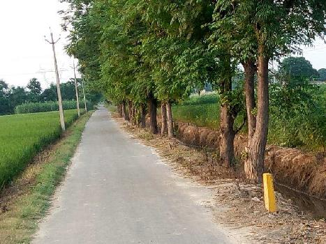 Agriculture land for sale in Punjab Jalandhar