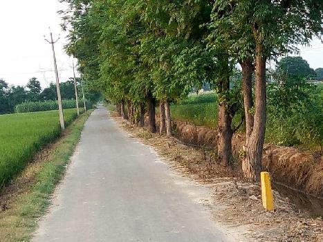 Agriculture land for sale in Punjab Jalandhar