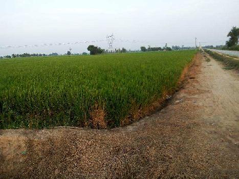 Agriculture land for sale in jalandhar