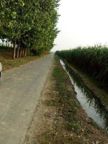 Agriculture land for sale in jalandhar Bhogpur
