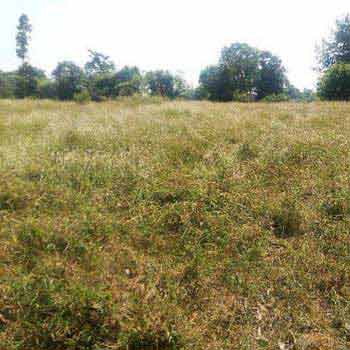 Agricultural cum hilly land for sale in hoshiarpur punjab