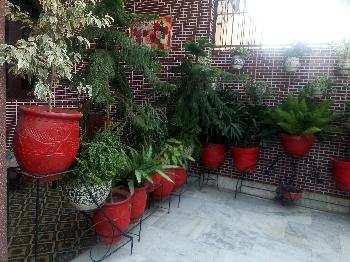 Kothi for sale in mount view colony hoshiarpur