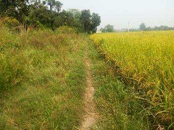 Agricultural land for sale in Hoshiarpur punjab