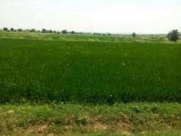 Agricultural/Farm Land for Sale in Punjab