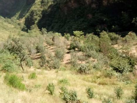 Land for sale in Dharamshala himachal