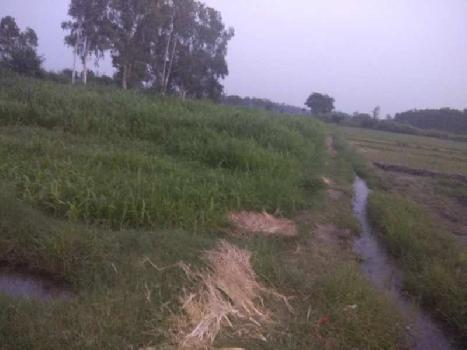 Agricultural/Farm Land for Sale in Hoshiarpur