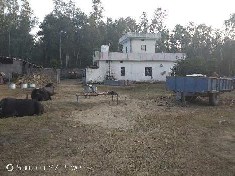 Farm house for sale with dairy farm shed