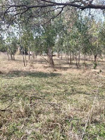 Hilly land for sale in Hoshiarpur 140 acre