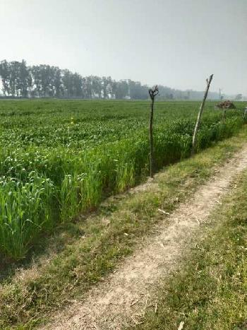Agriculture land for sale near mahilpur