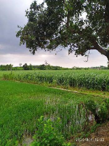 Land for sale nearest nasrala Hoshiarpur punjab