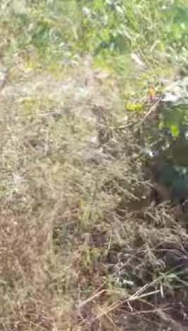 Barani agriculture land for sale bathula Hoshiarpur