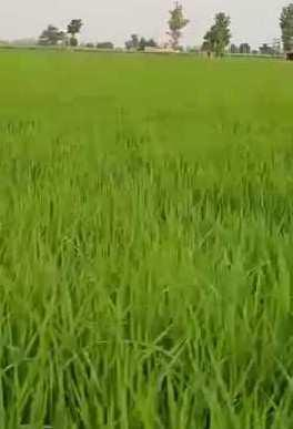 Agriculture land for sale near saila Hoshiarpur