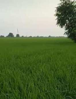 Prime agriculture land for sale in Fazilkha