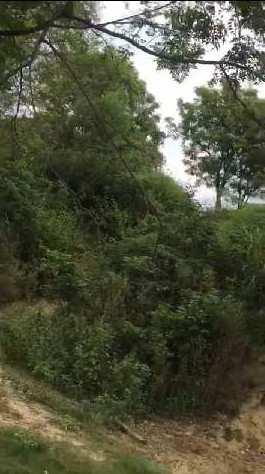 Cheap Agriculture land for sale in Balachour