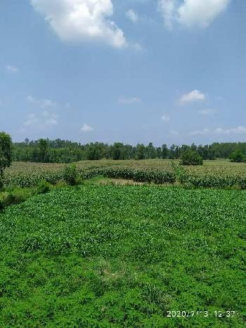 25 acre agriculture land for sale in Hoshiarpur