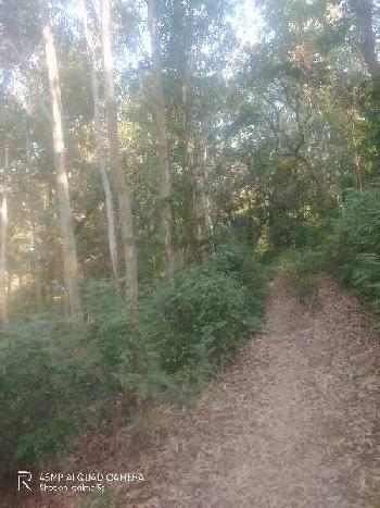 300 acre Hilly  land with trees for sale in Hoshiarpur