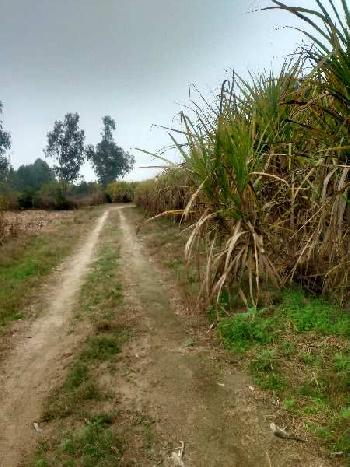 Agriculture Land for sale in Hoshiarpur Punjab