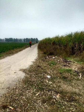 Agriculture Land for sale in Hoshiarpur Punjab
