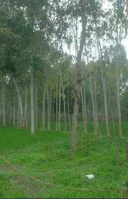 Agriculture land for sale near Nandachor Hoshiarpur