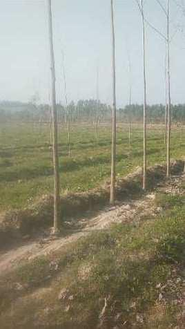 Agriculture land for sale in Hoshiarpur near haryana