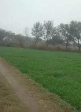 Agriculture land for sale in Hoshiarpur