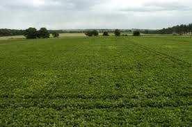 Bikaner Agricultural Land