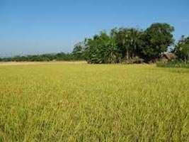 Agriculture Land in Bikaner