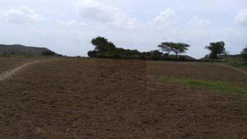 15 Dhur Residential Land for Urgent Sale in Madhubani