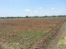 Residential Plot For Sale In Jagatpur, Madhubani, Bihar