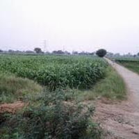 2.5 Acre Residential Land for Sale@Chhattarpur